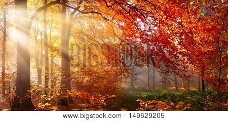 Autumn in the forest sunrays fall through mist and a beautiful red tree