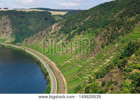 Moselle valley in summer with Mosel and vineyards.