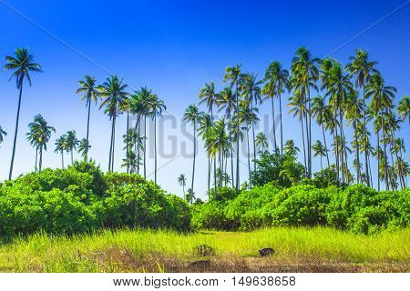 Landscapes On An Island