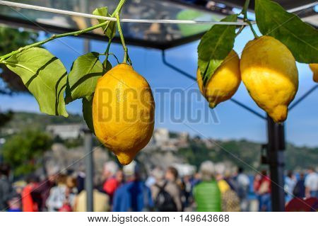 Yellow Lemons Hanging On Rope. Horizontal Close-up With  Lemons On Ropes In Italy, Typical Location