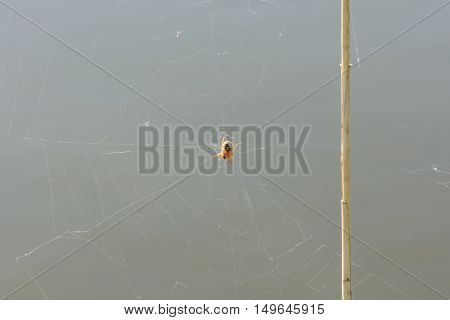 Web Of A Spider Against Gray Background. Close Up View Of The Strings Of A Spiders Web And Red Spide