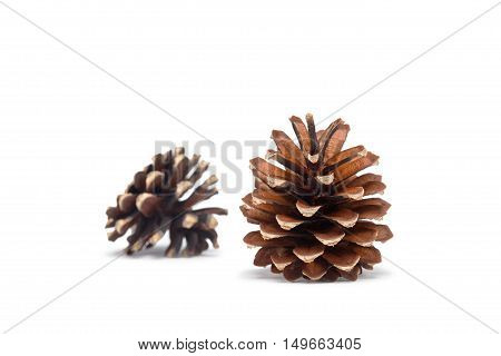 two fir cones on white background. Focus on foreground