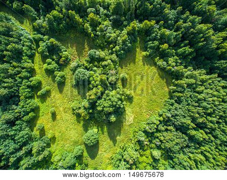 Aerial view of a green field with a forest around a heart form