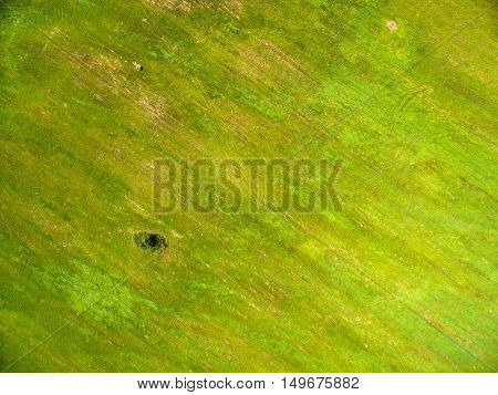 Aerial view tree on green field with cut grass