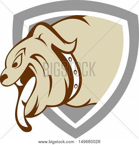 stock logo bull dog on shield security