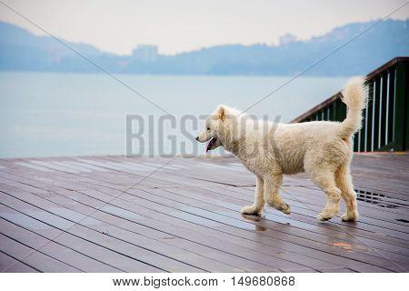 cute dog in Sun Moon Lake Taiwan