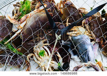 Crab Trap