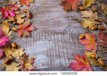 Thanksgiving greeting background with rye acorn and fall maple leaves. Thanksgiving seasonal background. Fall background. Copy space.