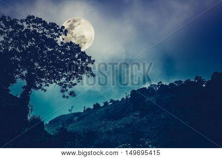 Silhouettes of tree against night sky and bright moon beautiful landscape with moon in the night sky. Outdoors. The moon were NOT furnished by NASA. Cross process and vintage tone effect.