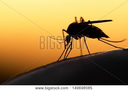 mosquito on human skin at sunset. Dengue and Zika outbreak