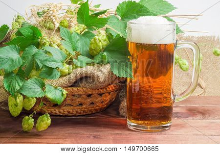 One beer glassware with beer branches of hops with leaves and cones and spikes of barley and wheat on a dark wooden surface