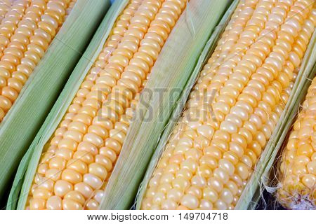 ear of fresh corn as part of the autumn harvest vegetables