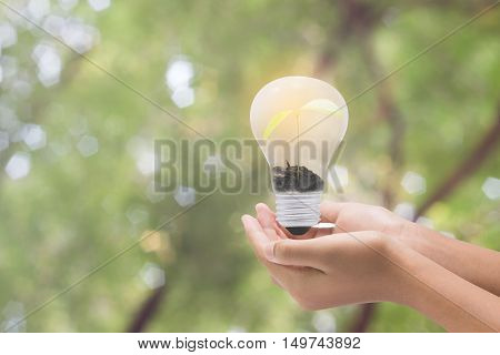Light Bulb In Woman Hand,realistic Photo Image. Turn On Tungsten Light Bulb With Hand,concept For Gl