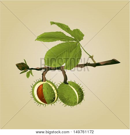 Chestnut tree conkers with leaves vintage fall background vector illustration