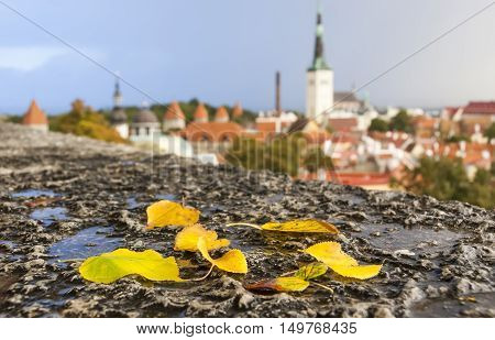 Yellow autumn leaves in front of the old town of Tallinn Estonia