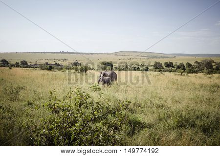 A mother and baby elephant on the african savanna