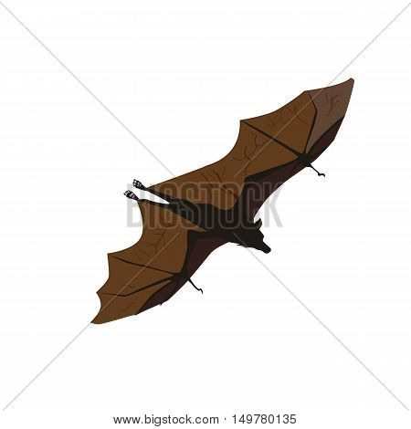 Bat in flight, isolated on white background