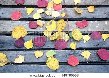 Still-life with many colorful fallen leaves fallen leaves on old vintage wooden table with outdoor top view close-up