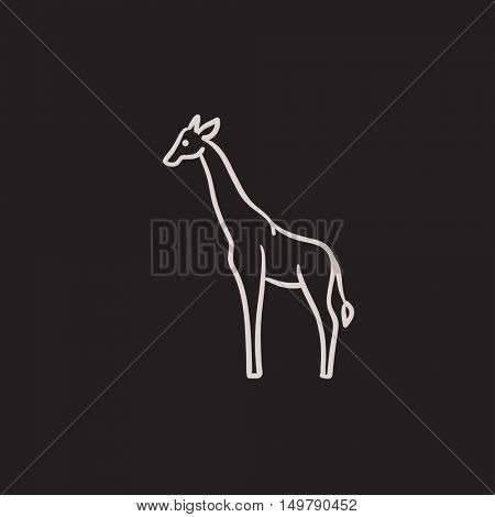 Giraffe vector sketch icon isolated on background. Hand drawn Giraffe icon. Giraffe sketch icon for infographic, website or app.