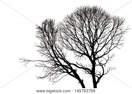 Silhouettes Of Dead Tree Without Leaves