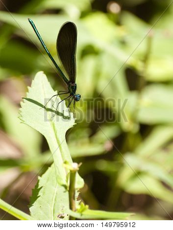 damselfly insect resting on leaf in sunlight