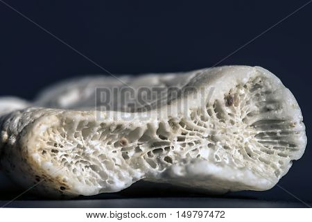 white coral piece studio macro closeup black background