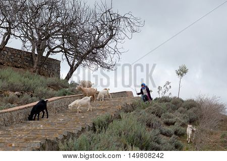CHEFCHAOUEN, MOROCCO - JANUARY 2, 2014: Girl drover with goats walking on the road to pasture.