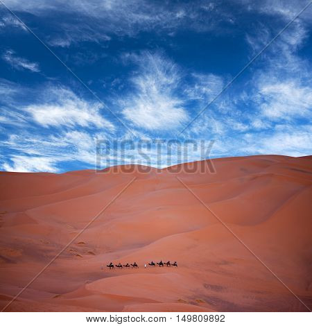 Camel Trekking In Sahara, Morocco