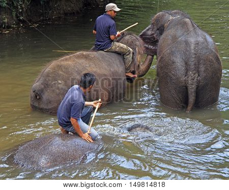 Men Are Bathing Elephants In The River