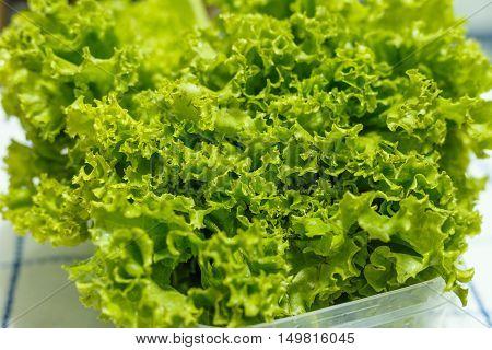 Fresh vegetable ready for eat on plate