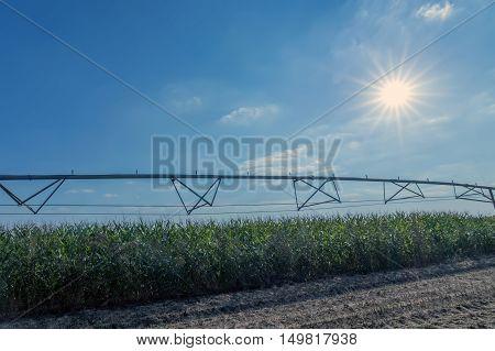 Corn field and irrigation equipment. irrigation system.