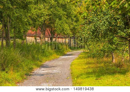 Country road through an apple orchard-Autumnal image with a rustic road through an apple orchard leading towards an old german house.