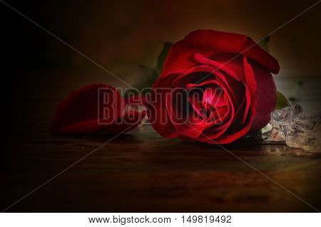 Texture Of Sigle Red Rose With Ice On Wooden Table In Vintage Style