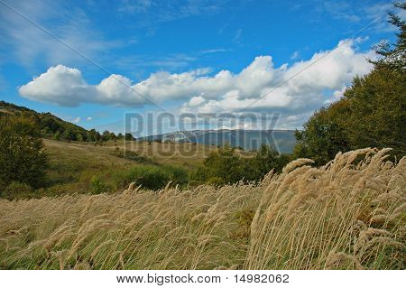 field on windy weather