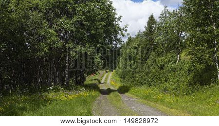 Country road, path surrounded by flowers and trees. Shadows and summer day. Red signs for the winter track.