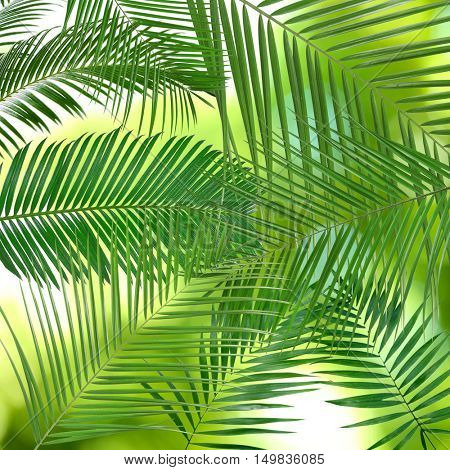 Green leaves of palm tree (Howea) on white background