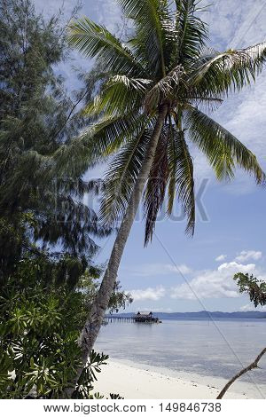 Raja Ampat Dive Lodge Jetty with Palm Tree in Foreground. Mansua Raja Ampat Indonesia