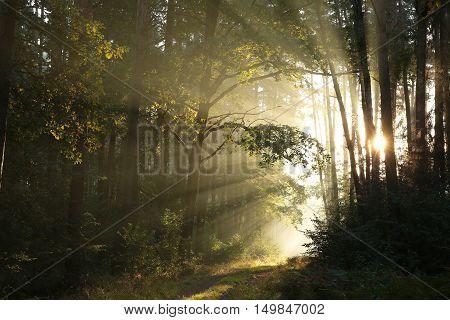 Forest path at sunrise. September, Poland .