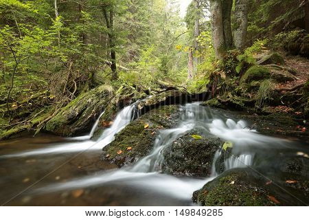 Forest brook in early autumn. October, Poland.