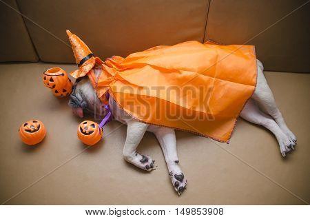 (Vignette effect) Cute pug dog with costume of happy halloween day sleep lay down on sofa with plastic pumpkin Jack O'Lantern