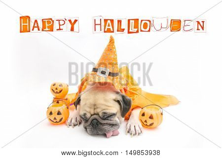 Cute Pug Dog sleep rest and tongue sticking out with Happy Halloween day and pumpkin concept
