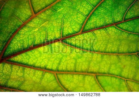 Autumn leaf texture abstract background. Natural pattern