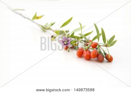 Branch with fresh red healthy goji berries