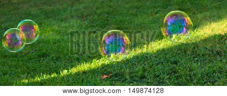 The rainbow soapbubble .Soapbubbles isolated on green natural background.