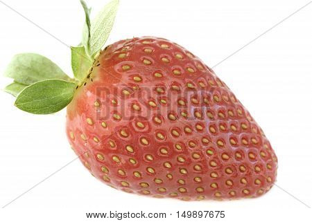 Single luscious ripe red strawberry with stalk in a close up side view showing the achenes on white