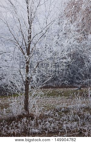 Winter Frost Tree