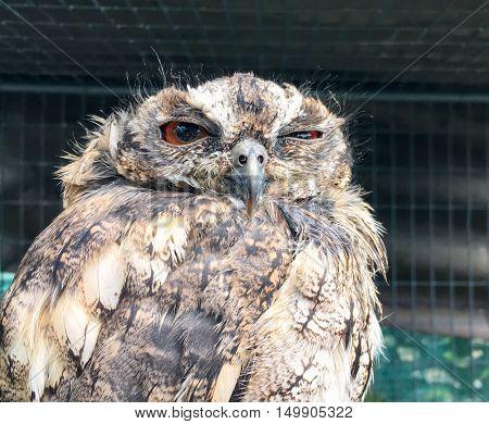 Funny sleepy owl with one eye open. poster