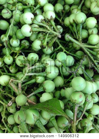 Closeup view of asian eggplant, view group of many eggplant, eggplant background