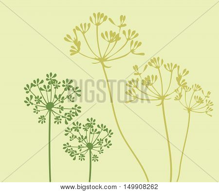 vector illustration of a fennel flower background