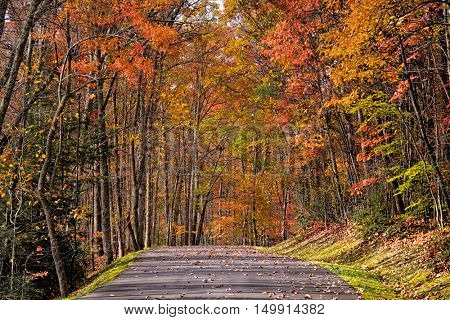Autumn alley in West Virginia